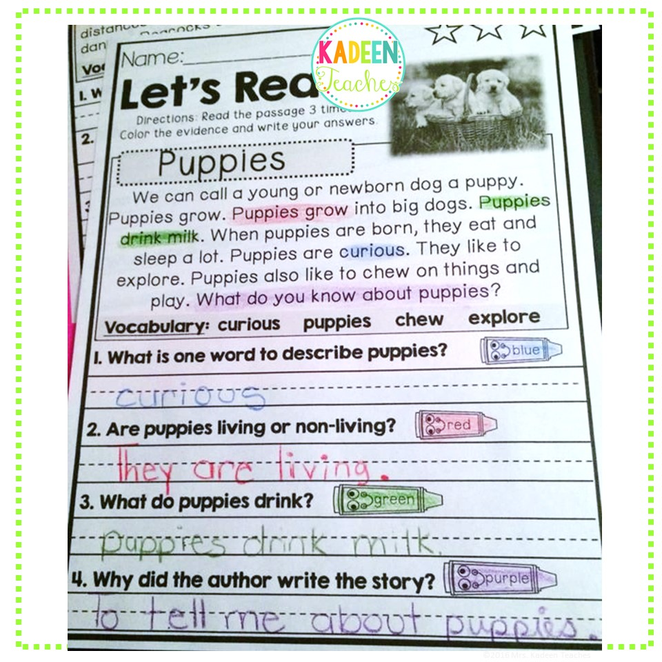 - Reading Comprehension And Text Evidence For Beginners (Animals)